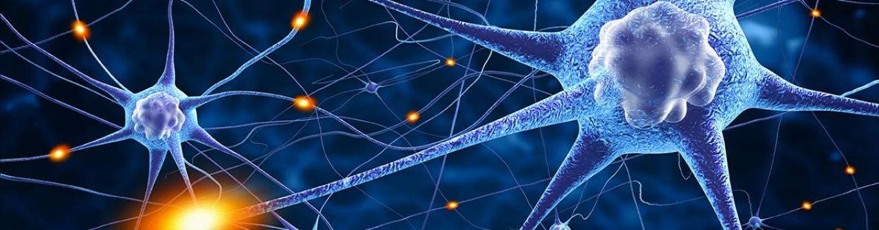 Erkrankung des Zentralen Nervensystems | boehringer-ingelheim.at